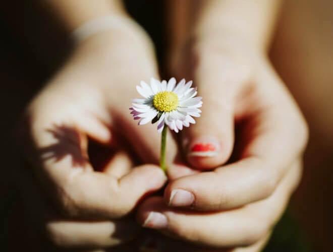 お花を差し出す子どもの両手