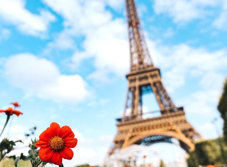青空の下の赤い花とエッフェル塔