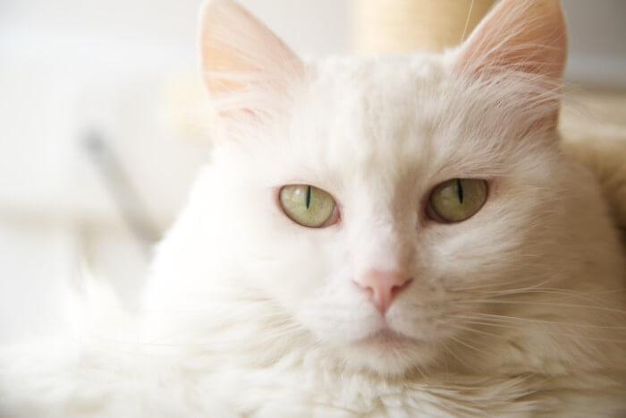 こちらを見る白猫
